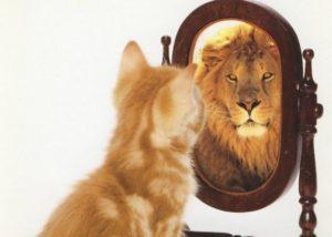 котенок смотрит в зеркало